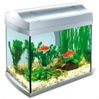 Annaritamaestra carta d 39 identit dei pesci rossi for Acquario per pesci rossi usato
