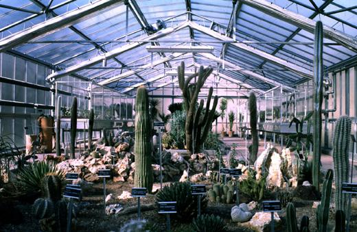 Annaritamaestra orto botanico for Serra piante grasse